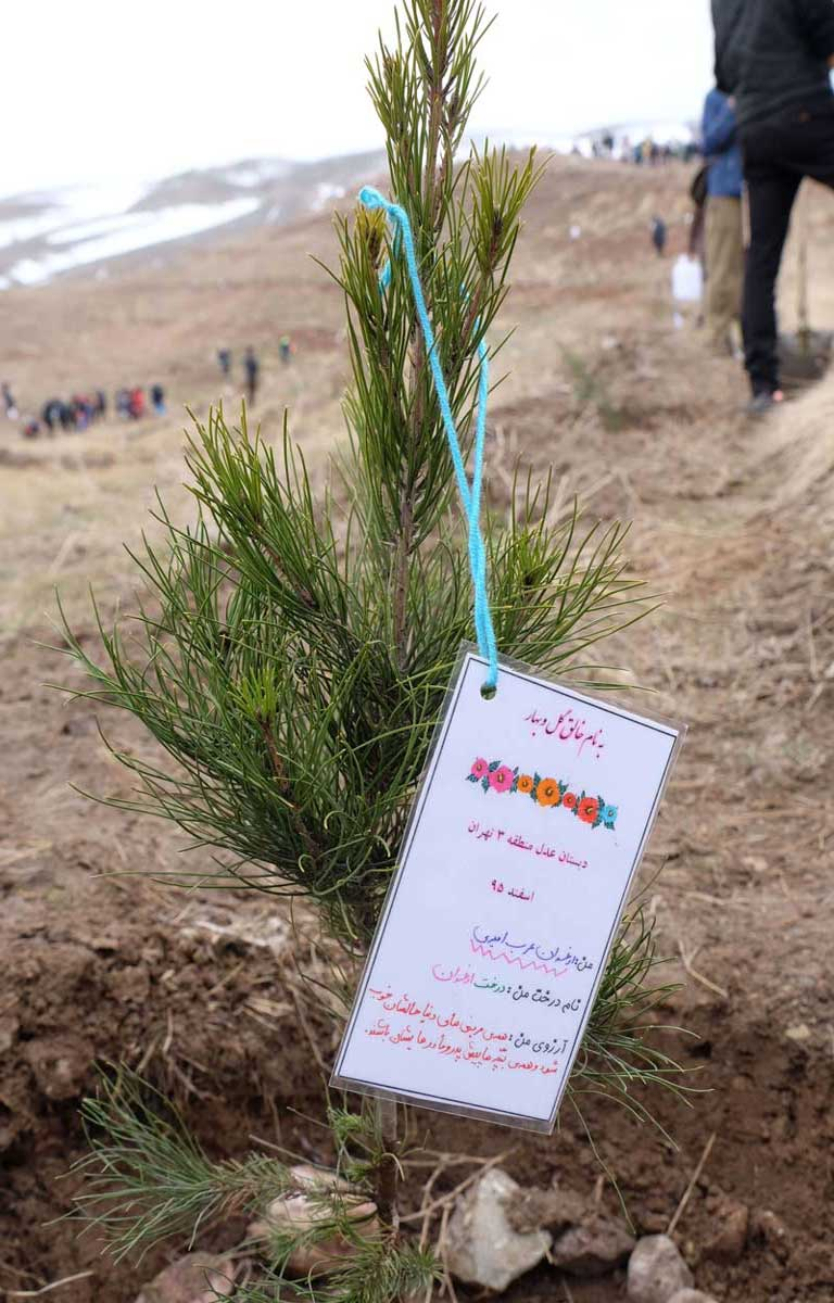 Reforestation Iran