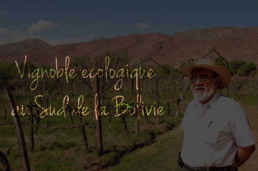 blog-ecologie-vignoble-ecologique
